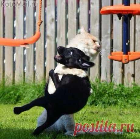Котуха-борцуха