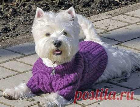 Свитер спицами для собачки Свитер для любимой собачки. Схема вязания спицами, выкройка и текстовое описание