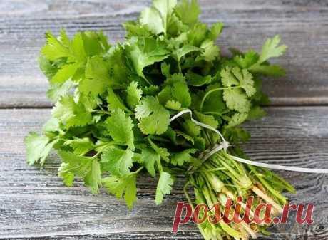 La utilidad kinzy. ¡Los riñones, el páncreas y el hígado se limpiarán de todo con un ingrediente natural!