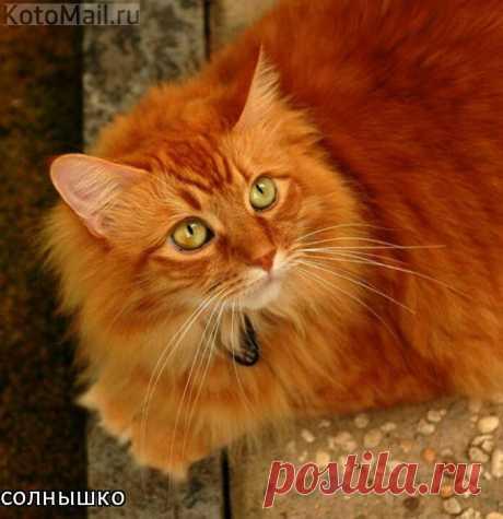 KotoMail.ru | Котэ с доставкой по почте