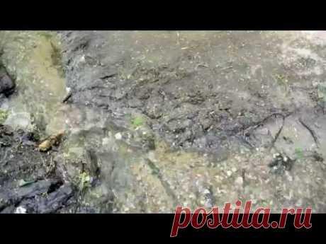 Лесной ручей - YouTube