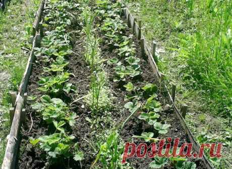 Siderata: rub in one \u000aOften ask what siderat the best. It is difficult to answer this question, and it is better to sow in general at once mix of siderat, for example, so well-known viko-oat mix. It enriches the soil and nitrogen …