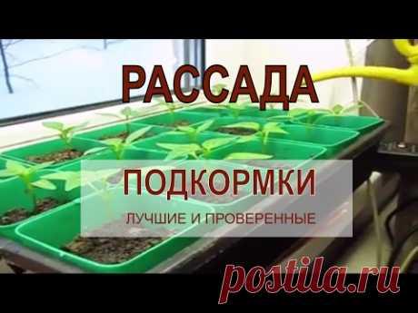 Самые лучшие ПОДКОРМКИ ДЛЯ РАССАДЫ томатов, перцев, баклажан - YouTube