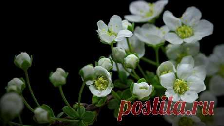 Дыхание жизни. Завораживающее видео о пробуждении природы весной Завораживающее видео о том, как прорастают из земли семена, из почек появляются листья и распускаются цветы. Настоящее дыхание Жизни.