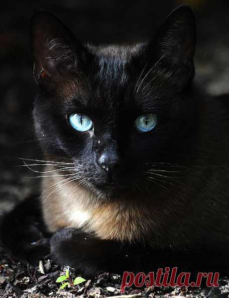 Someone has a lovely cat | Flickr - Photo Sharing!