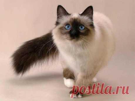 Сейчас вы увидите очень много красивых кошек