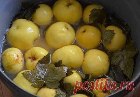 """Моченые яблоки - суперзакуска! Самые лучшие рецепты! Смотрите под фото и ставьте """"Класс!"""", чтобы сохранить их на своей страничке!"""