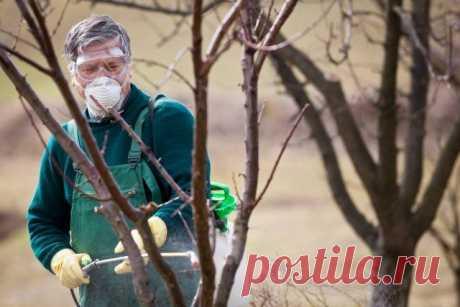 Подготовка сада к зиме: какие работы выполнить осенью | Уход за садом (Огород.ru)