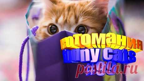 Вам нравится смотреть приколы про котов? Тогда мы уверены, Вам понравится наше видео 😍. Также на котомании Вас ждут: видео кот,видео кота,видео коте,видео котов,видео кошек,видео кошка,видео кошки,видео о котах, видео про кота, видео с котиками, видео эти смешные кошки, коты видео, кошек, кошки 2020, приколы от кошек, прикольные кошки, самые смешные животные, смешно кошка, смешные видео про кошек, смешные приколы про животных, смешные про кошек, смотреть котики, приколы с котами видео