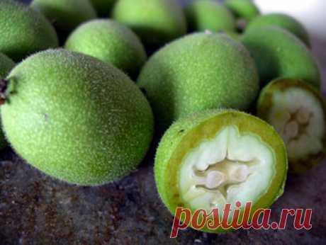 Что за чудо этот зеленый грецкий орех! Ка собрать и заготовить   У неспелых (зеленых) грецких орехов выявлен большой спектр положительных воздействий на организм человека, и потому плоды молочной спелости очень востребованы в народной медицине. Из зеленых орехов …