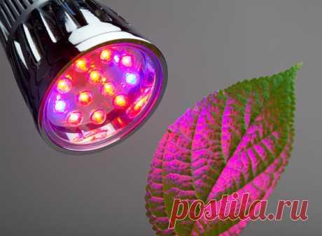 Подсветка рассады: 15 способов от белой бумаги до светодиодных ламп