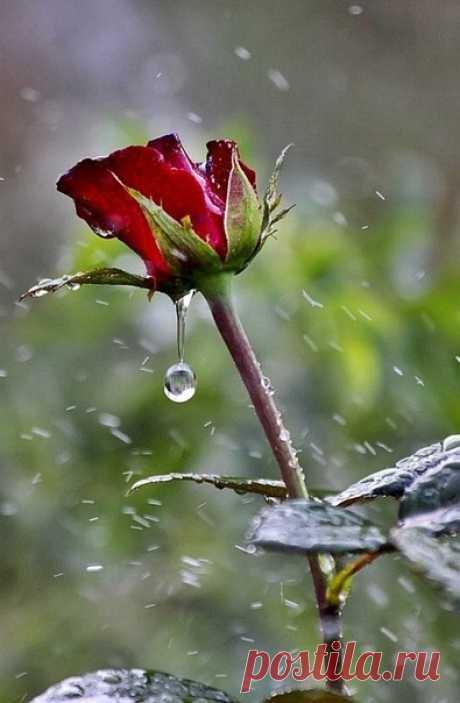 Дожди, как люди, совершенно разные... И повод разный, по какому льют, А души у дождей всегда прекрасные... Поэтому всегда их люди ждут.  Дожди бывают от любви счастливые... Дождинки самоцветами горят... Дожди такие, самые красивые И так к лицу им праздничный наряд.  Бывает, засмеется дождик весело... Протянешь к небу руки... нет его! И солнышко свои лучи развесило, А по земле тепло... как молоко...  А иногда дожди бывают грустные... Случается, что на душе печаль... Дожди т...