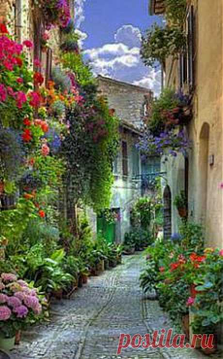 Verona Italy Street Flowers - Totally Frickin Awesome|Pinterest