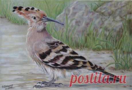 Рисуем красивую птичку — Сделай сам, идеи для творчества - DIY Ideas