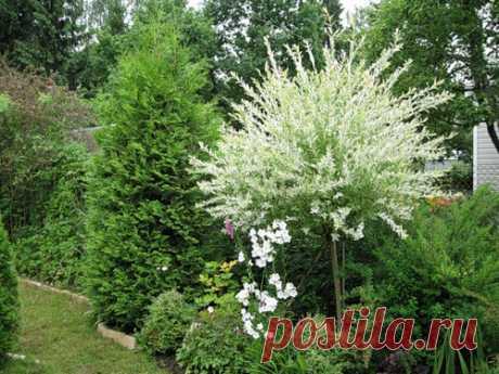 Светящиеся растения - Ольга и Зеленые руки — LiveJournal