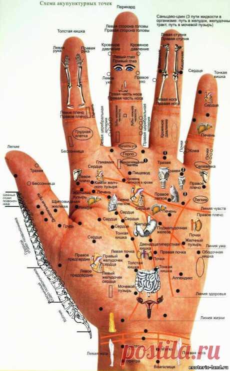 Диагностика по рукам: кисти и ладони.