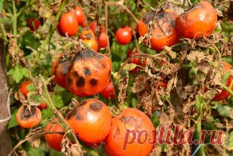 Всё, что вы хотели знать о грибных болезнях — Ботаничка.ru