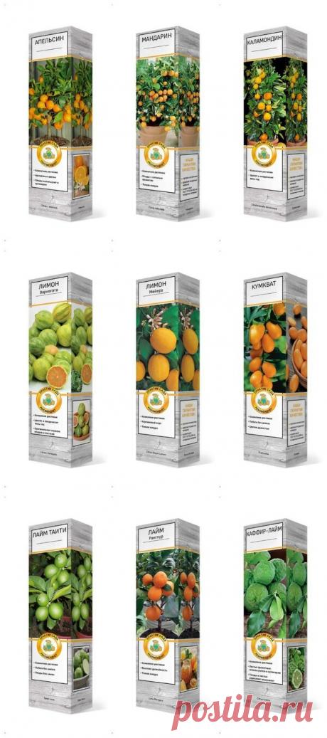 Семена для огорода в городской квартире | Сад и Огород | Яндекс Дзен