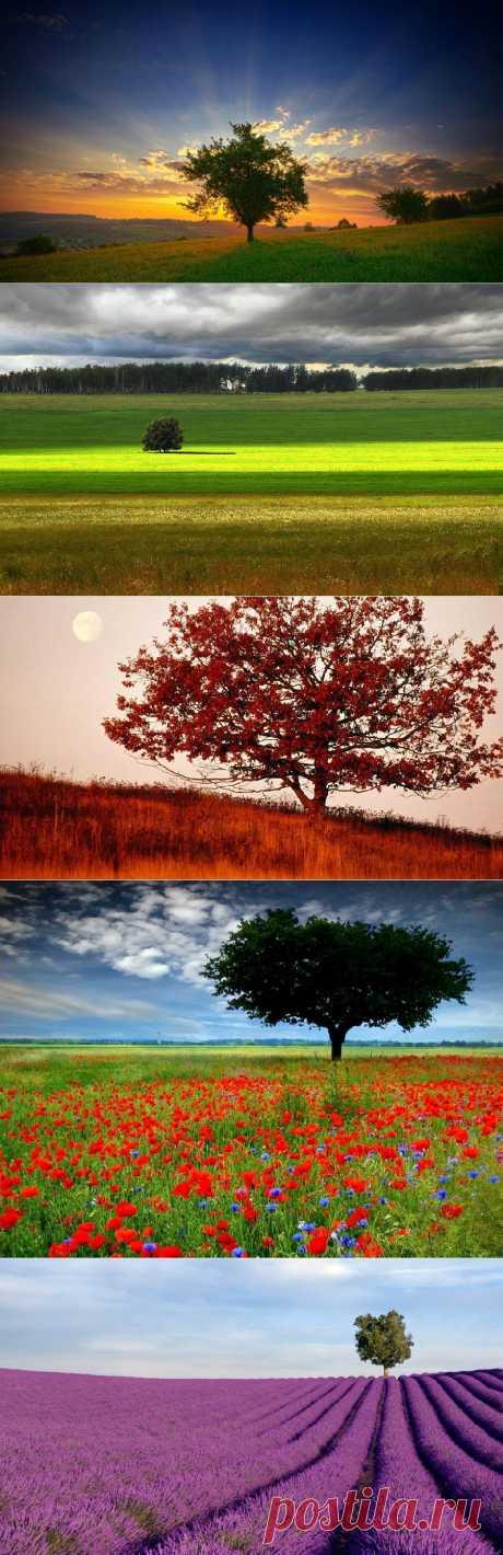 » Одинокие деревья на полях Это интересно!