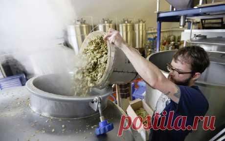 В Великобритании неиспользованный хлеб пустят на производство пива | В мире