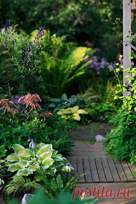 Секреты красивого сада. Цвет. | Хюгге на шести сотках | Яндекс Дзен