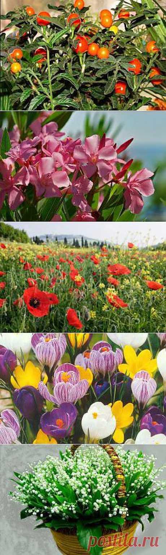 Какие цветы наиболее опасны для человека? | hint4.me: Вопросы и Ответы
