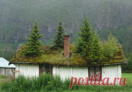 🏠 9 фото офигенных скандинавских домов с заросшей крышей, в которых хочется провести старость Красота и спокойствие.