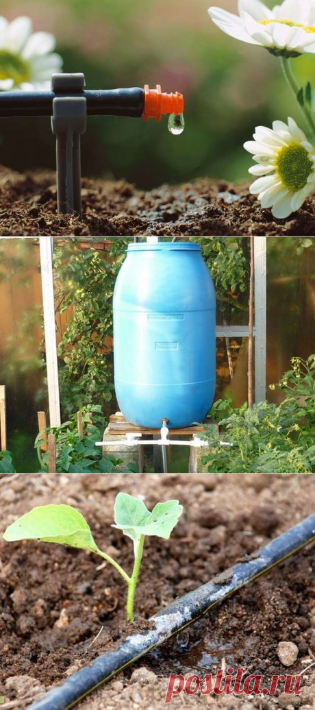 Устройство системы автоматического полива для теплицы