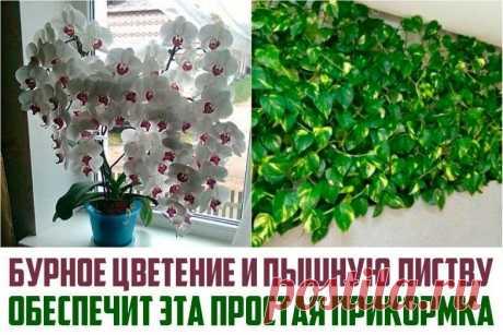 Бурное цветение и пышная листва обеспечены, если полить растения этой простой подкормкой! Любое комнатное растение периодически нужно подкармливать, особенно важно делать это в вегетативный период и период цветения.Вызвать усиленный рост и цветение даже самого хилого растения помогут обычные дрожжи! Вот рецепт цветочной подкормки!Удобрение для комнатных растенийИНГРЕДИЕНТЫ:-...