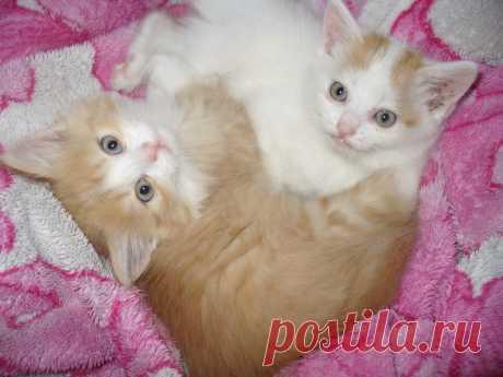 Две сестренки- Булка и Белка