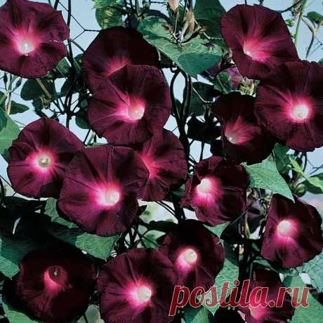 Капелька души - цветы!