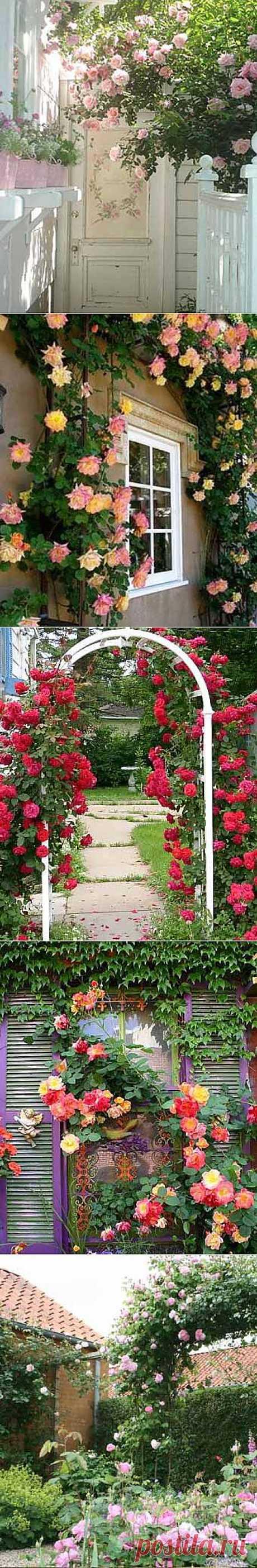 Розы возле вашего дома - Дача Своими Руками