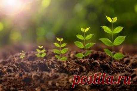 Как Приготовить Стимуляторы Роста для Растений своими руками
