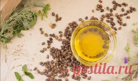 Кедровое масло: применение, лечебные свойства масла кедрового ореха