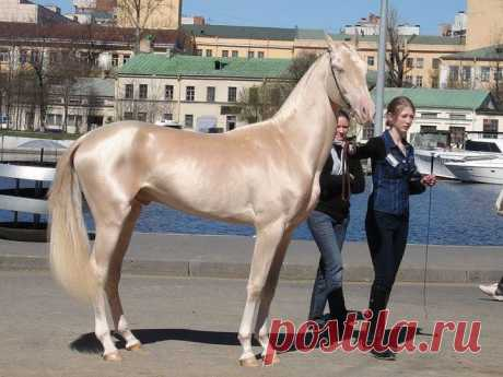 Редкие масти лошадей / Питомцы