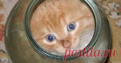 Котенок застрял в банке. Посмотрите, что сделала кошка-мать | В темпе жизни