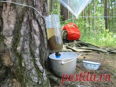 Козленочком не станешь — как сделать фильтр для очистки речной воды в походных условиях
