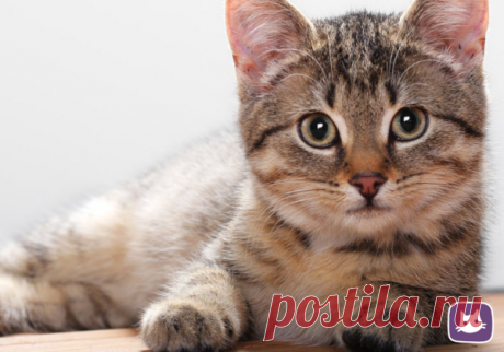 🐱Как правильно глистогонить кошку | Нос, хвост, лапы | Яндекс Дзен