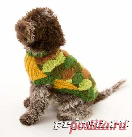 Вязание для собак спицами – свитер из мотивов