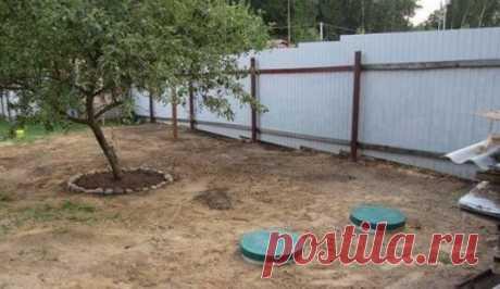 Какие деревья сажают, чтобы не откачивать яму? (Мощнейшие осушители грунта - биодренаж) | Строю для себя | Яндекс Дзен