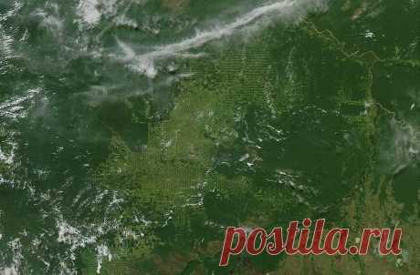 Ученые РФ научили нейросети определять поврежденные участки леса на спутниковых снимках   Наука и технологии