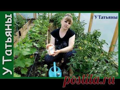 ¡La SOSA - el socorrista de su huerta! La sosa alimenticia - la fertilización para: los pepinos, los tomates y otras plantas