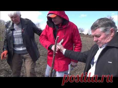 Агротехнические работы на двухлетке ореха грецкого  Март 2020