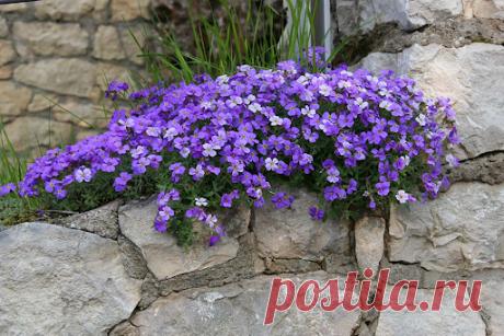 Заменяем сорняки почвопокровниками: подборка цветущих многолетников, стелющихся по земле | уДачный выбор | Яндекс Дзен