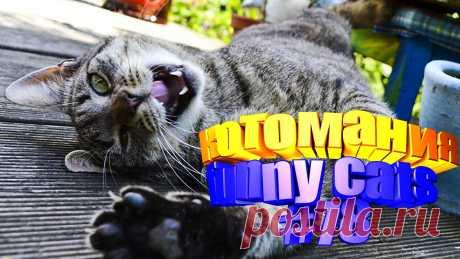 видео котов смешных, смешное видео коты, смешной кот видео, смешное видео кот, видео кот том, приколы коты видео, видео кот, коты видео приколы, видео с котом, смешные животные видео, смешные видео животных, животные видео смешное, смешное видео животных, смешных животных, приколы с котами, прикол с котом, кота приколы, смешные коты, видео смешные кошки, кошка смешная, про смешных кошек, видео кошек смешные, смешное видео кошка, смешное кошка видео, смешное о кошках, смешные кошек, видео с кошка