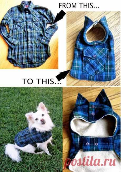 Из рубашки - для собаки Модная одежда и дизайн интерьера своими руками