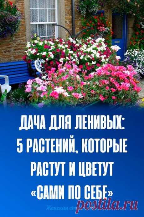 Дача для ленивых: 5 растений, которые растут и цветут «сами по себе»