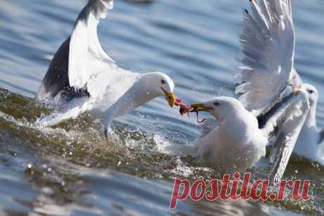«Ужин на двоих» Снимок Виктора Иванова. Ссылка на портфолио автора – nat-geo.ru/photo/user/199851