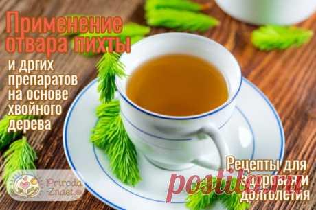 Пихта: полезные свойства и противопоказания, применение в народной медицине Удивительные лечебные свойства пихты. Список показаний к применению. Как правильно приготовить этот травяной чай. Рецепты. Видео