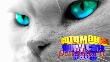 Любите смотреть видео про смешных котов? Тогда мы уверены, Вам понравится наше видео 😍. Также на котомании Вас ждут: видео кот,видео кота,видео коте,видео котов,видео кошек,видео кошка,видео кошки,видео о котах, видео о смешных кошках, видео смешные котиков, говорящие коты видео, коты видео, кошка видео смешные, приколы котами, приколы котов, про котика, про кошку видео, смешное о кошках, смешные видео про кошек, смешные котята